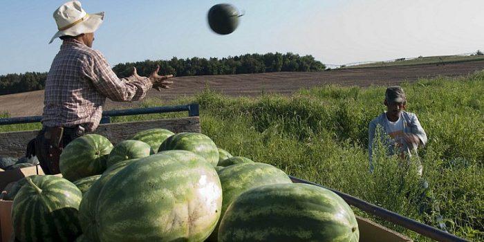 smart melon drone
